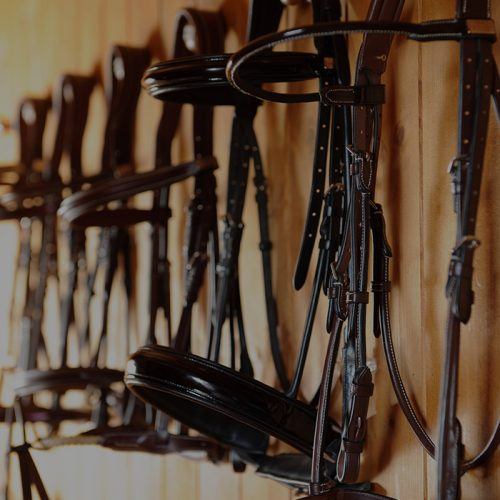 Saddles and riding accessories - Selleria Equipe Srl